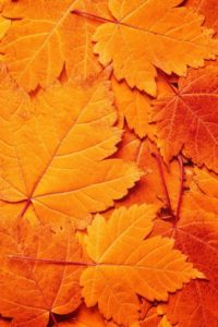 arsen-rock-weekly-moodboard-31-16-leaf-autumn-orange